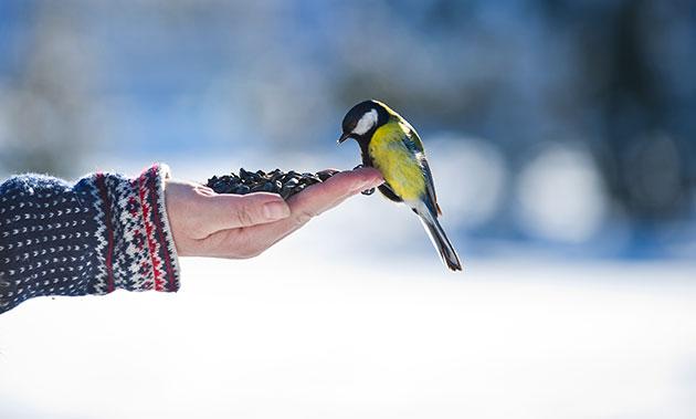 birdtrust