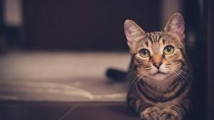 cat-1246736_1280