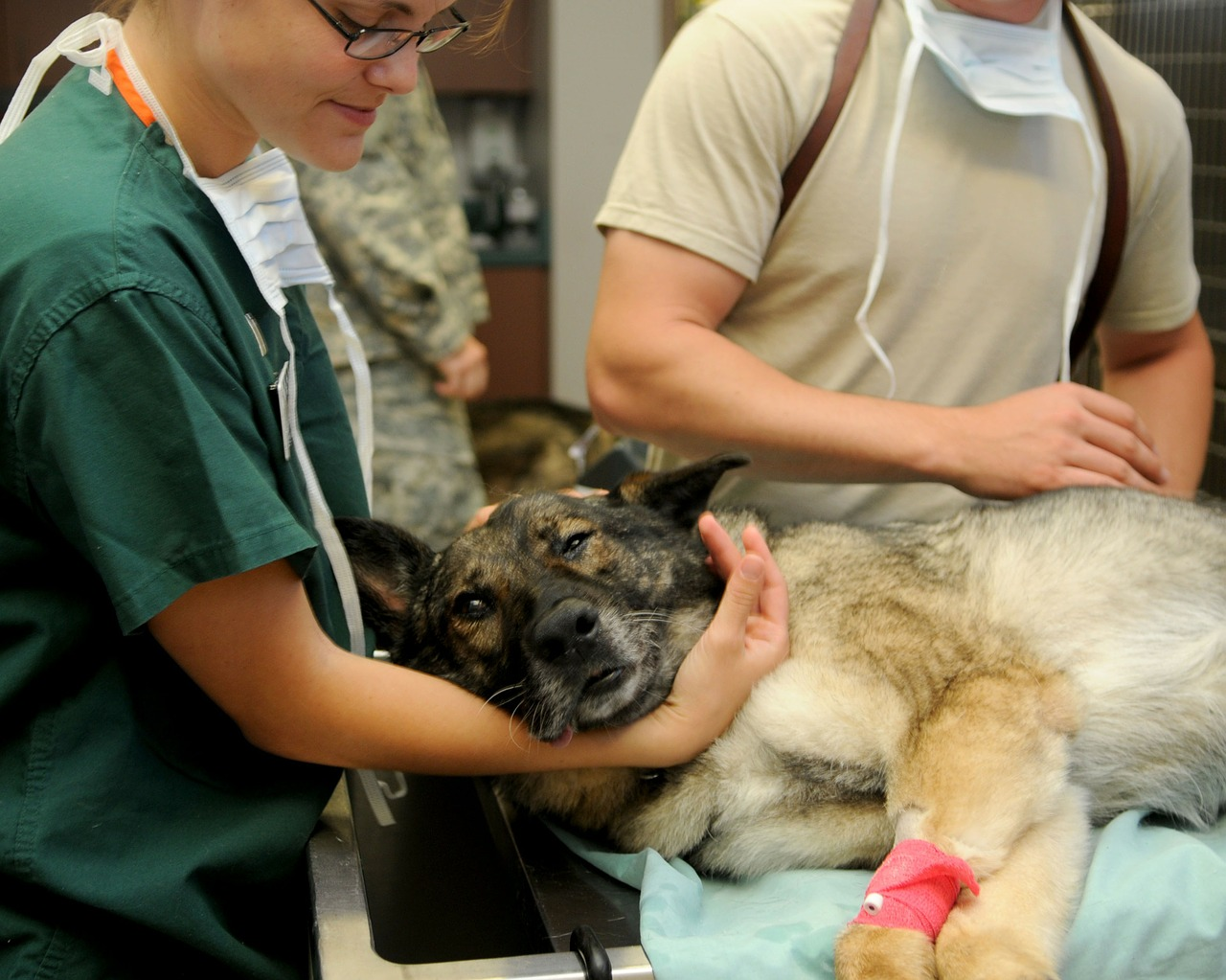 What is a vet Description and meaning